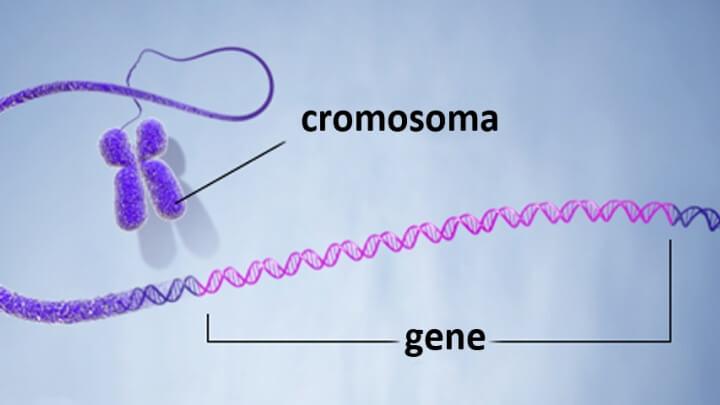 Существование Y-хромосомы